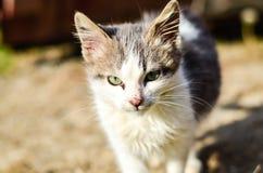 Kitten in a garden Stock Images