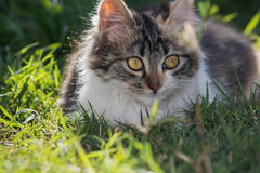 Kitten in the garden on green grass Royalty Free Stock Photo