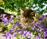 Kitten in the garden Stock Image