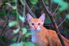 Kitten in garden Royalty Free Stock Photos