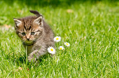 Kitten in the garden Stock Images
