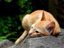 Kitten in the garden. A wild kitten relaxing and sleeping in the garden Royalty Free Stock Photography