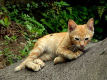 Kitten in the garden. A wild kitten watching and playing in the garden Royalty Free Stock Photos