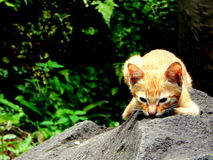 Kitten in the garden. A wild kitten watching and playing in the garden Stock Photography