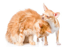 Kitten gently stroked a puppy. isolated on white background Stock Image