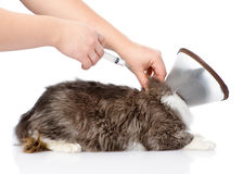 Kitten getting a vaccine at the veterinary clinic. isolated on w Royalty Free Stock Images