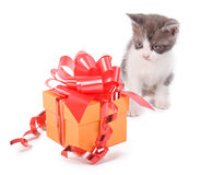 Kitten with a gift Stock Image
