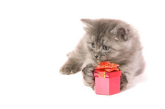 Kitten with gift. The small grey kitten embraces a red box with a gift on a white background Stock Photo