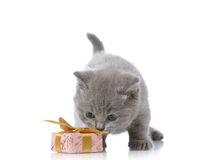 Kitten and gift box Royalty Free Stock Photos