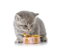 Kitten and gift box Royalty Free Stock Images