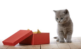 Kitten and gift box Stock Images