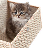 Kitten in a gift box Stock Photography