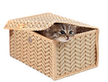 Kitten in a gift box Stock Image