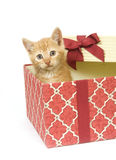Kitten in a gift box Royalty Free Stock Photos