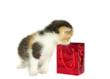 Kitten and gift box isolated. Kitten looking into gift box isolated on white Royalty Free Stock Images