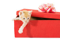 Kitten in a gift box Stock Photos