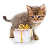 Kitten with gift box stock photo