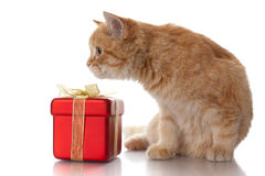 Kitten and gift box on a white background. Stock Image