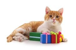Kitten and gifts. Stock Photo