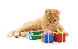 Kitten and  gifts. Kitten and gifts on a white background Stock Image