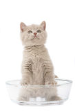 Kitten in a glass bowl. Kitten in a glass bowl on a white background Royalty Free Stock Photo