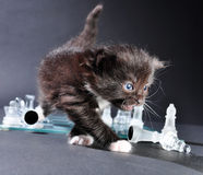 Kitten on glass chess board with pieces Stock Photo