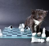 Kitten glass chess board with scattered pieces Stock Photo