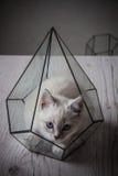 Kitten in glass florarium Stock Image