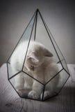 Kitten in glass florarium Royalty Free Stock Photos
