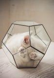 Kitten in glass florarium Royalty Free Stock Photo