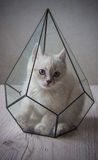 Kitten in glass florarium Royalty Free Stock Image