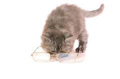Kitten and glasses. The grey Kitten plays with glasses on a white background close up Royalty Free Stock Photos