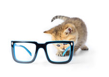 Kitten and glasses on white background Stock Images