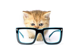 Kitten and glasses on white background Royalty Free Stock Image