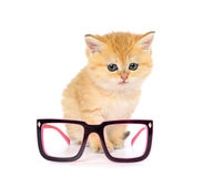 Kitten and glasses on white background Stock Photo