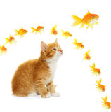 Kitten and goldfish Royalty Free Stock Images