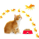 Kitten and goldfish Royalty Free Stock Image