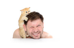 Kitten grabbed the man's head on white background Stock Images
