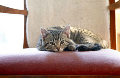 Kitten on grandma`s chair Royalty Free Stock Images