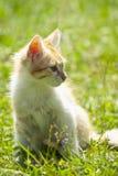 Kitten in the grass Stock Photo
