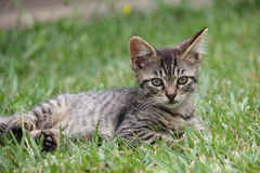 Kitten in the Grass Stock Images