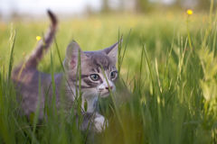 Kitten in grass Stock Photos