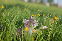 Kitten in grass Stock Images