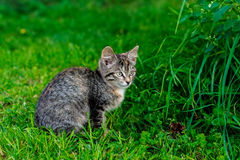 Kitten in the grass. Cute kitten sitting in lush green grass Royalty Free Stock Photos