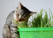 Kitten and grass Royalty Free Stock Photo