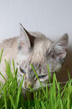 Kitten and grass Stock Images