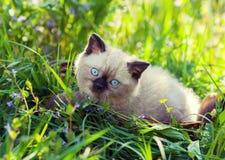 Kitten on the grass Royalty Free Stock Photo