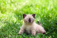 Kitten on the grass Stock Image