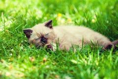 Kitten on the grass Stock Photography
