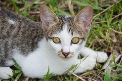 Kitten on grass field Royalty Free Stock Photo